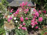 Rosenbeet auf dem Reiterhof Krüdenscheid