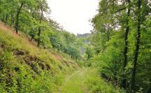 Auf wenig begangenen Wegen geht es hinunter ins Kasbach-Tal