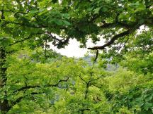 Durch das Dickicht kann man hinnter ins Rheintal bis nach Unkel blicken