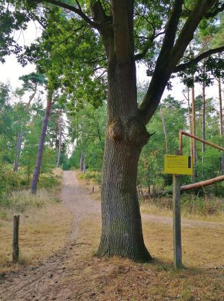Auf niederlländischer Seite im Naturschutzgebiet am Hülzenberg