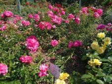 Im Rosengarten Seppenrade