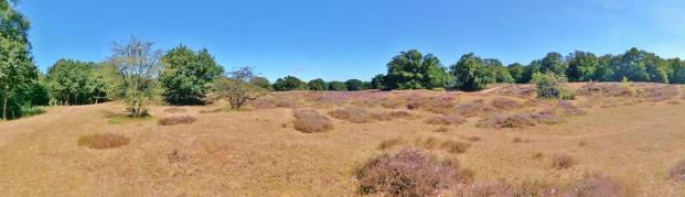 Panoramabild aus dem Naturschutzgebiet