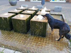 Brunnen vor dem Rathaus. Doxi kommt erst nicht richtig an das Wasser ran...