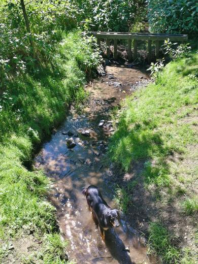 Doxi stärkt sich im Muttenbach