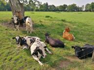 Auf den Flächen links und rechts des Flusses weiden Kühe