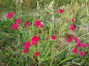 Hübsche Blumen am Rand des Wildgeeheges