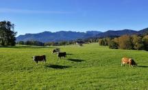 Weideflächen bei Wackersberg