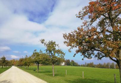 Birnenbäume säumen dem Weg zu den Wirtschaftsbetrieben