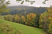 Je höher wir kommen, desto bunter wird der Wald