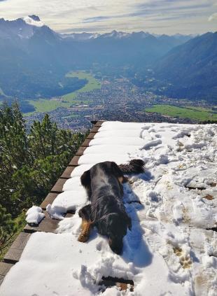 Auf der Startrampe für Drachenflieger: Doxi robbt begeistert durch den Schnee.