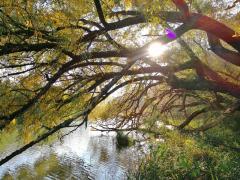 Flusslandschaft in der tiefstehenden Herbstsonne