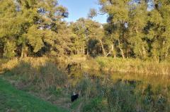 Auenlandschaft am Fluss