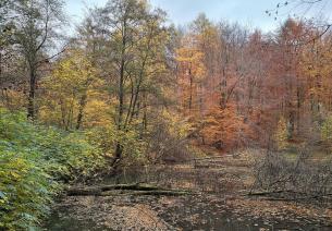 Großer Weiher mitten im Wald