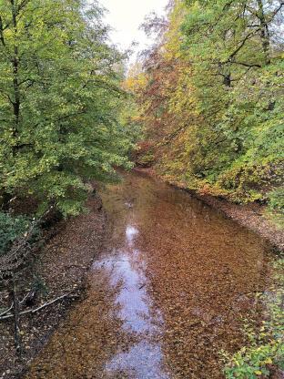 Wasserlauf voller Laubblätter im Stadwald