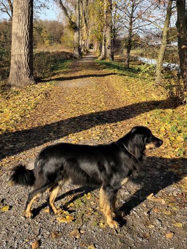 In der Herbstsonne geht es entlang der Niers in Richtung Viersen