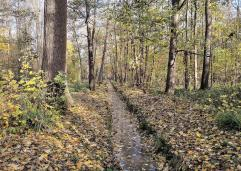 Kleine Kanäle entwässern die feuchte Landschaft