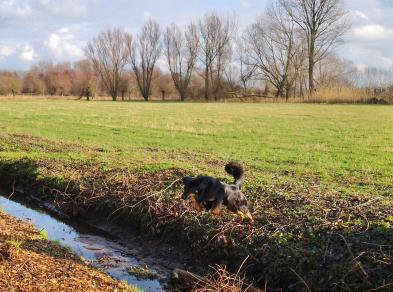 Doxi ist unser Lieblingsbachspringerhund :-)