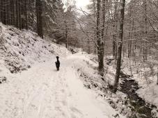 Entlang eines Bachlaufs steigen wir durch den Wald hinauf in Richtung des NSG Struffelt