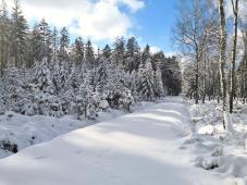 Auf einem Seitenweg sind wir die Ersten im frischen Schnee von Gestern