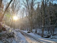 Die Sonne leuchtet tief in den Wald hinein