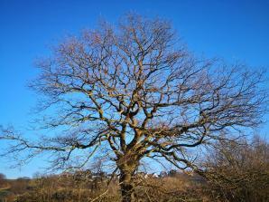 So schön sieht man das Astwerk der Bäume nur im Winter