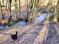 Doxi kommt vom Hohnbach den Hügel hinauf gesprintet