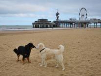 Vorsichtige Annäherung mit einem Rüden am Strand