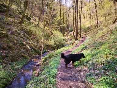 Durch den Dieblicher Wald geht es parallel zum Aspeler Bach wieder talwärs