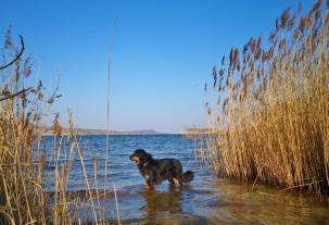 Doxi testet die Wasserqualität des Sees