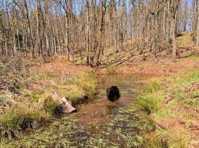 Endlich hat Doxi ein Wasserloch entdeckt. Viele Bäche gibt es im Kyffhäuser-Wald nicht, weil der Boden den Regen fast vollständig aufsaugt