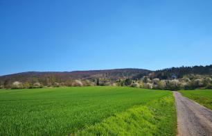 Blick vom Stausee hinauf zum Kyffhäuser-Wald