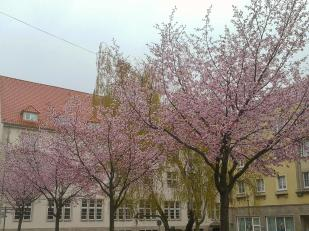 Nordhausen im Regen