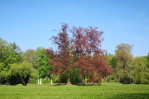 Gerade frisch erblüht: Die prächtigen alten Bäume im Park Sanssouci