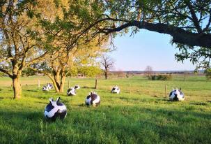 """""""Euter, die Spazierengehen"""" von Silke de Bolle aus dem Jahr 2010 am Ortsrand von Wiesenburg/Mark"""