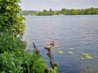 Der Baldeneysee: Ein Paradies für Wasservögel