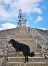 Eine lange Treppe - Doxi stürmt wie immer voraus