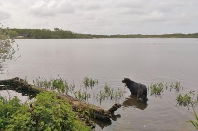 Doxi testet die Wasserqualität im Hinsbecker Bruch