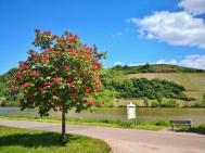 Prächtig blühende Bäume säumen unseren Stellplatz