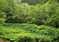 Grüne Hölle am Nackenbach