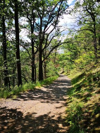 Auf gut ausgebauten Wanderwegen geht es hinauf zum großen Burgberg