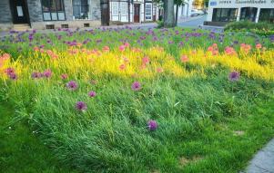 Blumenwiese neben dem Pfarrhaus