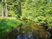 Die Hever im Arnsberger Wald