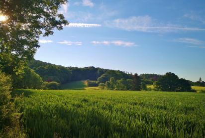 Am Waldrand zwischen Blomberg und Schieder