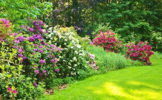 Blühende Azaleen im Schlosspark