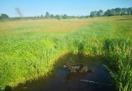 Doxi stärkt sich an einem Wassertümpel