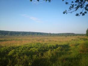 Blick aus dem Wald hinter Wilsede