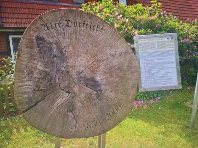 Baumscheibe der alten Dorfeiche