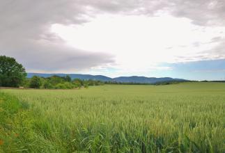 Kornflächen rund um das Kloster