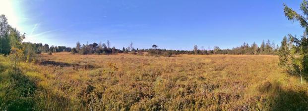 Panoramabild von den Heideflächen im Wurzacher Ried