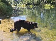 Doxi testet die Wasserqualität der Donau